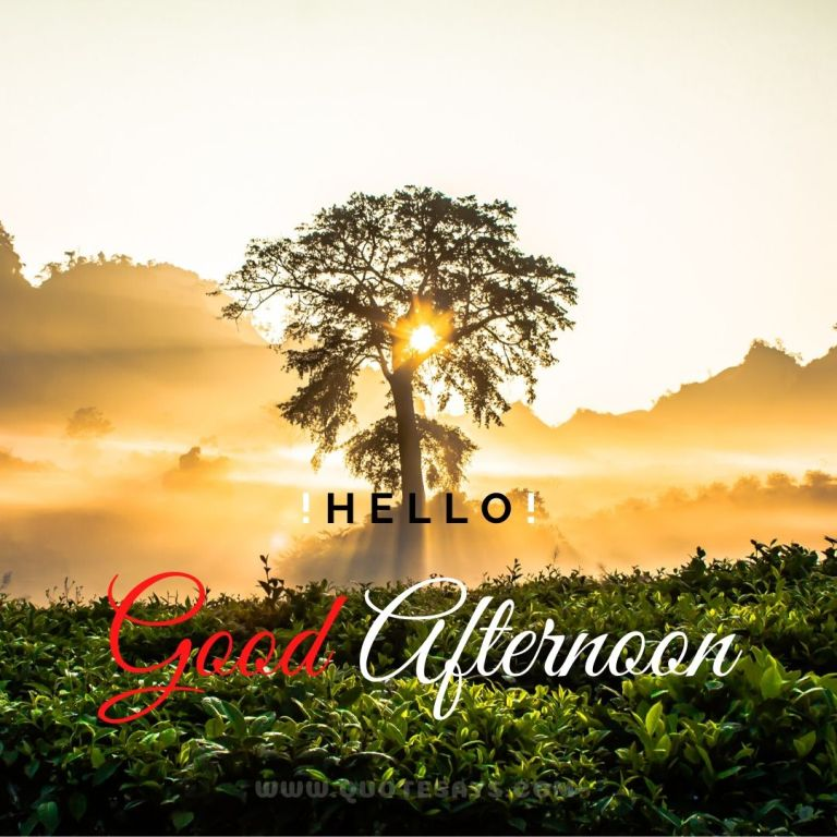 Good Afternoon Sun Behind the tree Images, Good Afternoon Images Hd, Good Afternoon Images Download