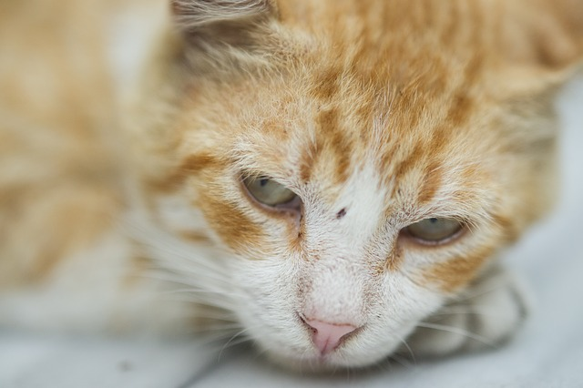 Ciri Ciri Kucing Hamil Sehat