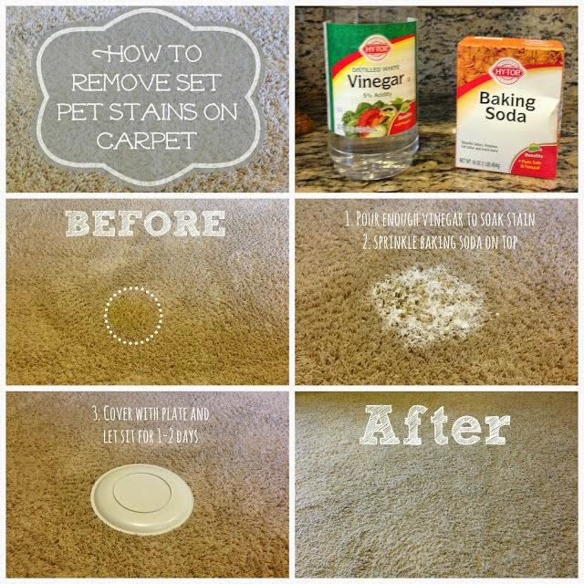Little Brags How To Get Rid Of Pet Stains On Carpet