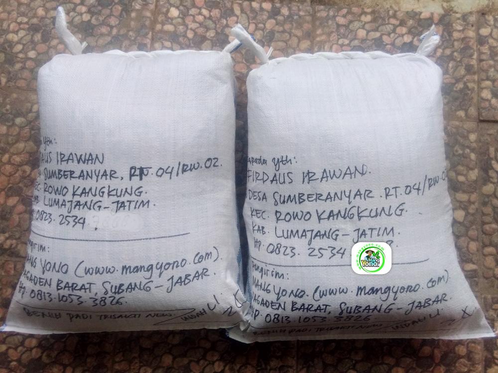Benih Pesanan FIRDAUS IRAWAN Lumajang, Jatim. (Setelah packing)