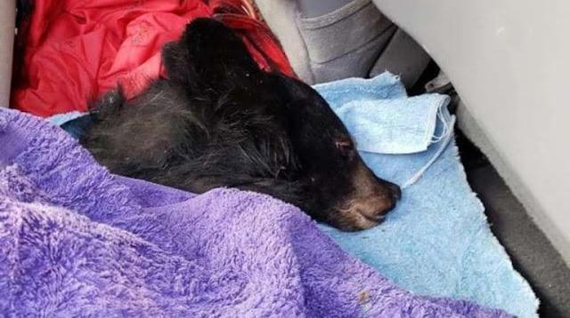 Мужской поступок: рыбак бросился в ледяную воду, чтобы спасти медвежонка-сироту