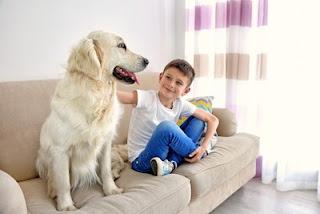 cães no sofá