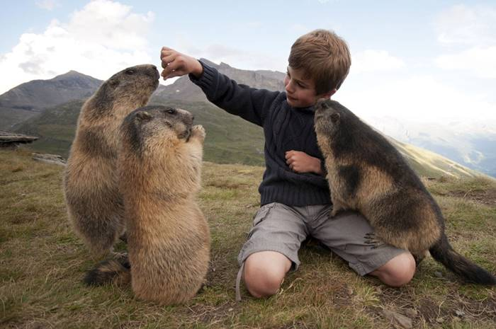 There are many marmots in Austria