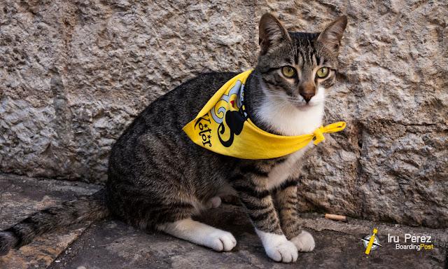 Gato de Kotor con pañuelo