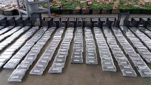 En cargamento de limones encuentran mas de una tonelada de cocaína, ademas de varios kilos de heroína y metanfetamina en Sonora