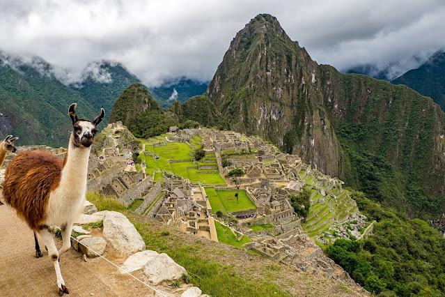 Peru The Wandering Juan