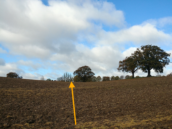 Walk to the left of the tree in the middle of the field