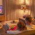 FILM1 en NPO Extra nu ook beschikbaar voor alle televisie klanten van Kabelnoord