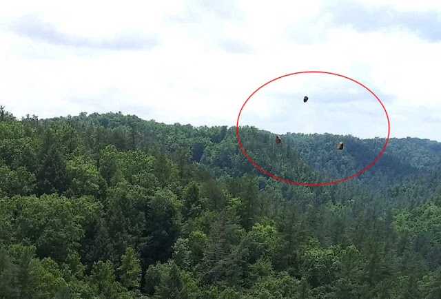 Mufon case 101069 - Photographer took image of holographic anomalies from a parallel universe?  Holgraphic%2Banomalies%2Bparallel%2Buniverse%2B%25282%2529