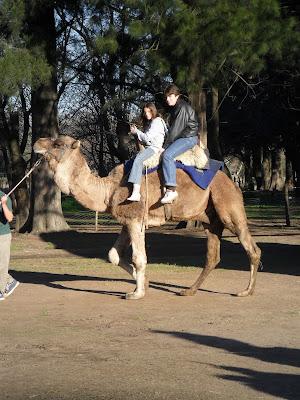 conhecendo a América Latina; Buenos Aires; Zôo Lujan; camelo