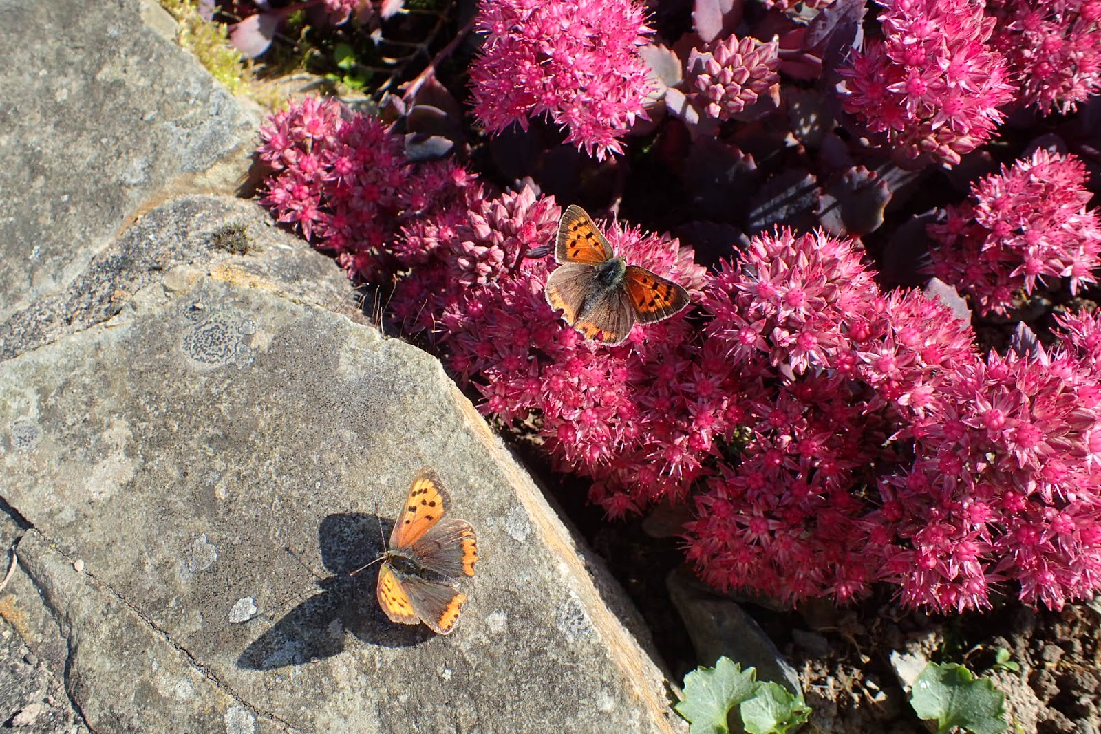 Carmarthenshire Moth And Butterfly Group September 2019