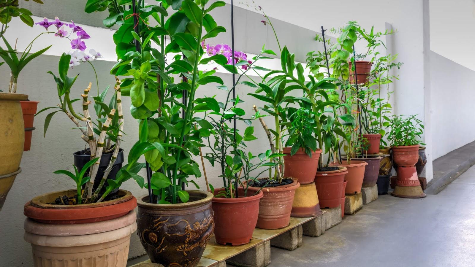 Plantas terrestres y acu ticas vivero green house for Plan de negocios de un vivero de plantas