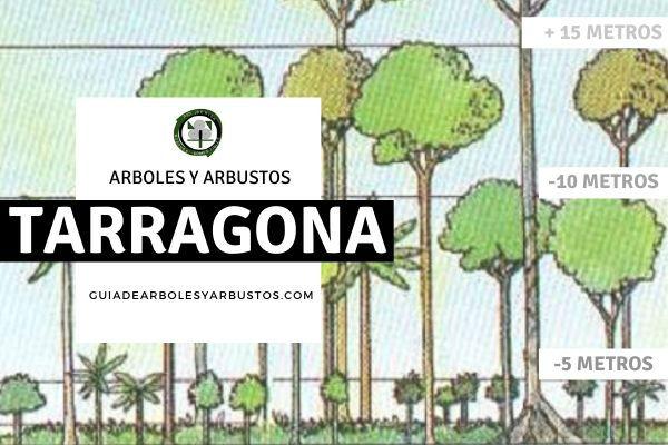 Arboles y arbustos de la provincia de Tarragona, España, por estratos