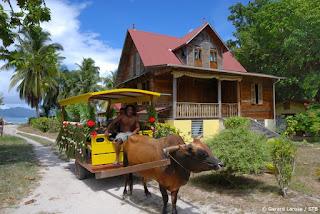 Ox Cart on Seychelles Island