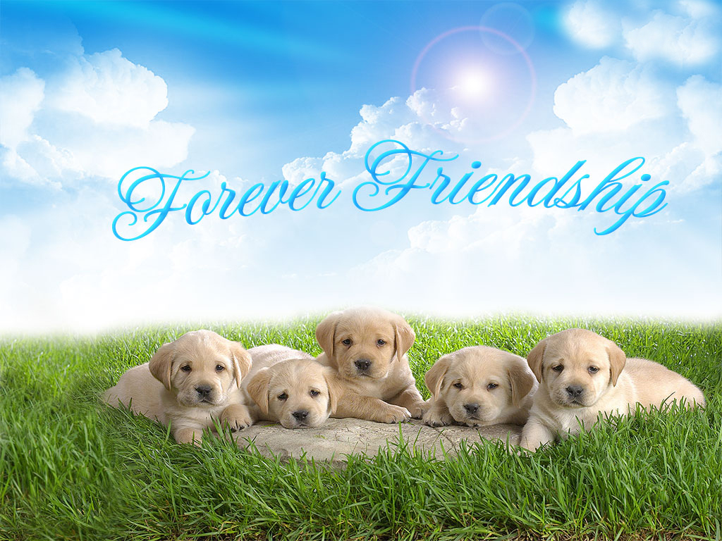 Friendship Day wallpapers,Friendship Day pics,cute wallpapers of Friendship Day ,hd pics of ...