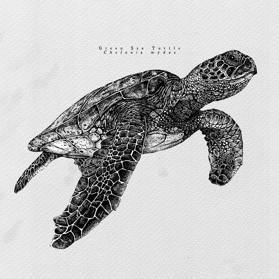 Sea Turtle by Last Maps