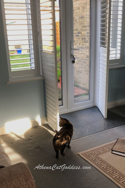 tabby cat investigates new shutters