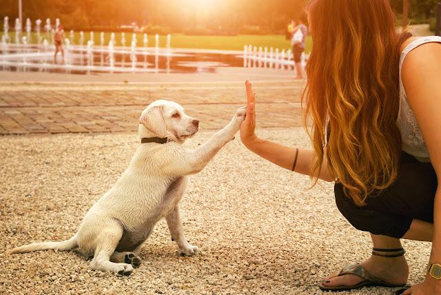 Devenir un gardien ou un promeneur d'animaux
