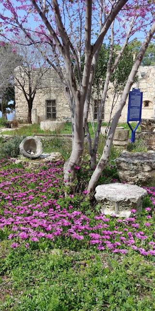 חניתה, מוזיאון, גליל מערבי, אביב
