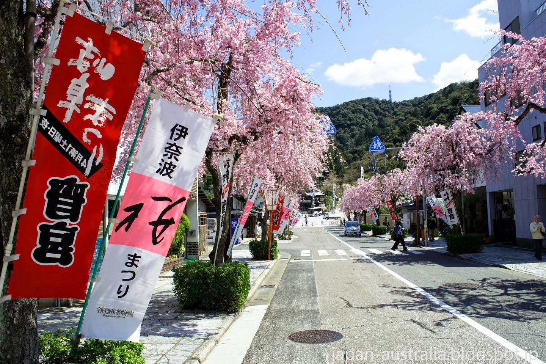 Japan Australia: Cherry Blossoms at Inaba Shrine Gifu