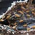 طرق مكافحة النمل الابيض الحديثة - كيفية مكافحة النمل الابيض باحدث الطرق