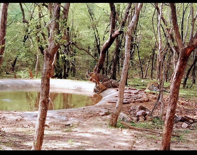 Ranthambore National Park Photos
