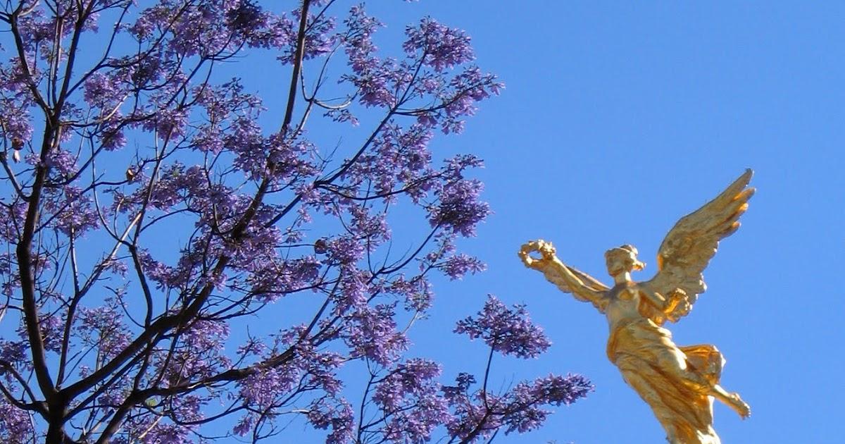 Mexico City An Opinionated Guide When Jacarandas Bloom