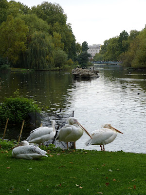 The pelicans in St James's Park