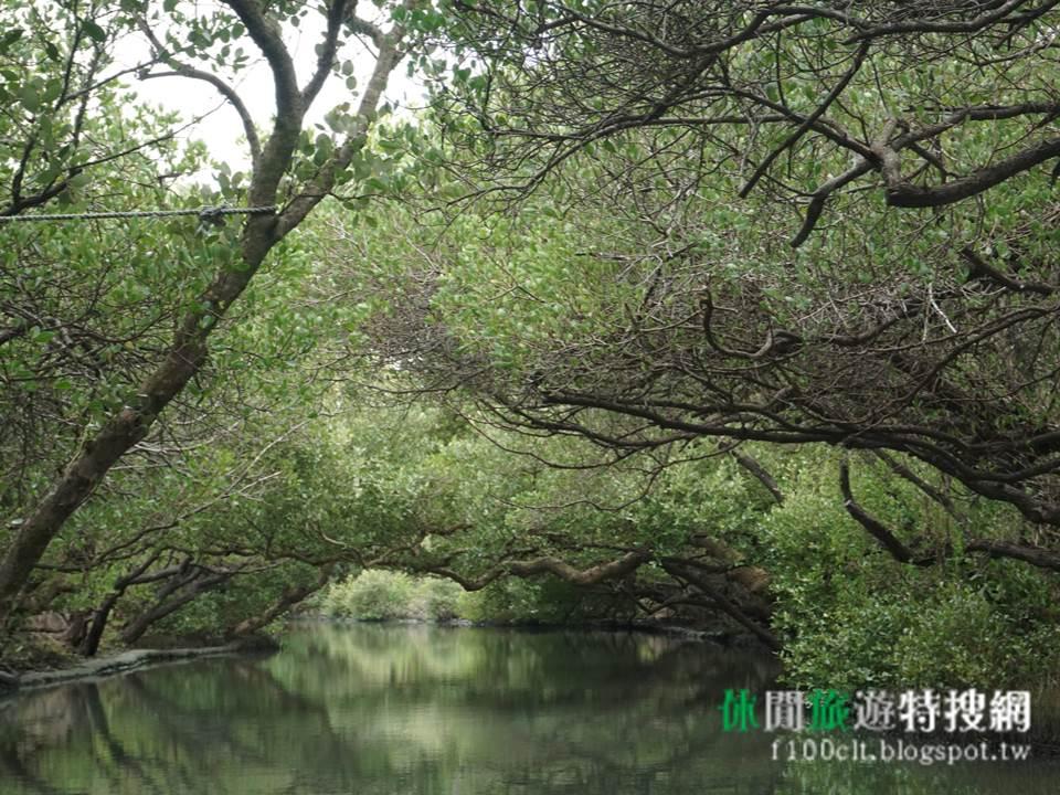 [臺灣.臺南] 台灣小亞馬遜 --- 四草綠色隧道/紅樹林生態/台江國家公園