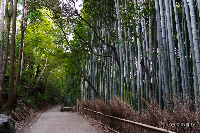 sentier de la bambouseraie, Arashiyama, Kyoto