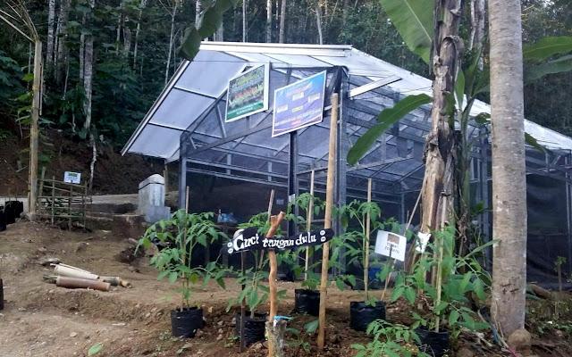 Wajah Dusun Kaliduren, Kebonharjo, Samigaluh Yang Menghijau