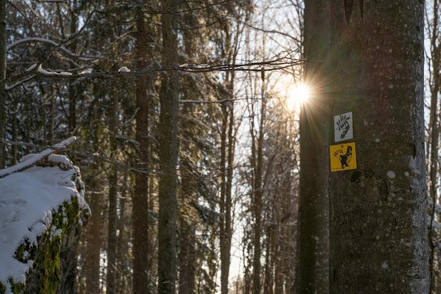 Rundweg Felswandergebiet  Wandern im Nationalpark Bayerischer Wald 02