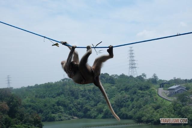 Feeding Monkey dan Cerita Dibalik Nama Gua Kreo