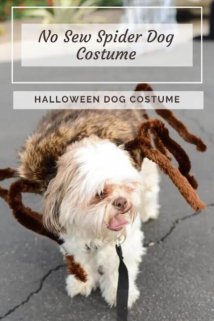 No Sew Spider Dog Costume