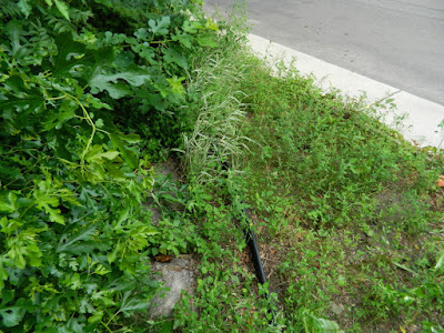 By Paul Jung Gardening Services--a Toronto Organic Garden Company Riverdale Front Garden Cleanup Before