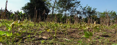Daños bosques lluvia ácida