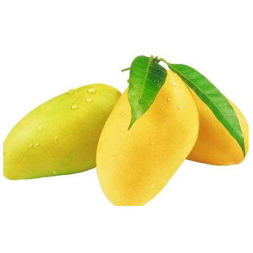 Best Seasonal Fruits Mangoes Trading Business Idea - Fresh Mangoes