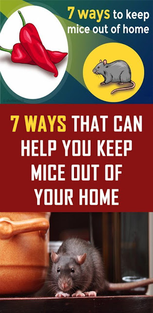 7 Ways That Can Help You Keep Mice out of Your Home