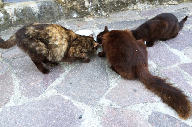 Why A Castration Obligation For Free-Range Cats Can Save Lives