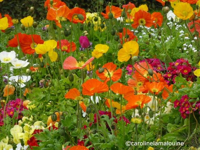 Carolinelamalouine fleurs fra ches for Fleurs fraiches