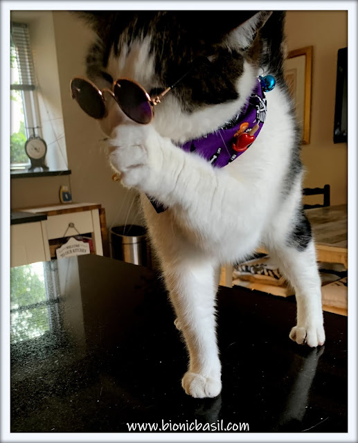 Undercover Melvyn  -  Cats In Sunglasses  ©BionicBasil® The Pet Parade 371 BBHQ Hot Gossip