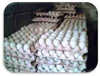 Tahap Pemasaran Telur Bebek