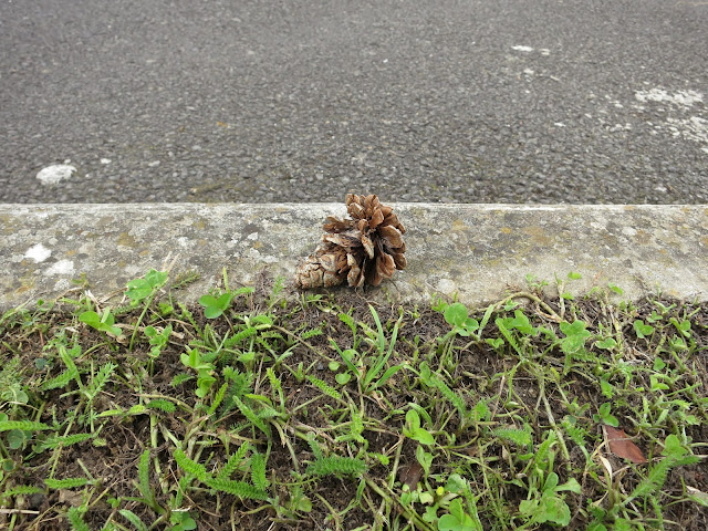 Pine Cone Balanced on the Edge of a Kerb