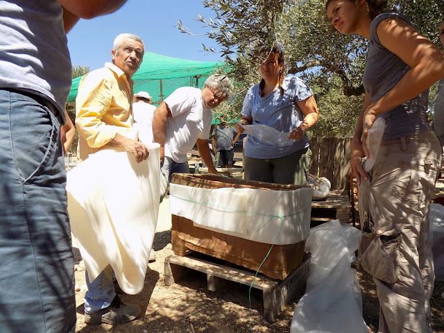 Farmer discovers Late Minoan III larnax burials in southern Crete