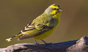 Kabar Terbaru Download Bunyi Masteran Burung Mozambik Gacor Mp3 Kabarterbaru Co