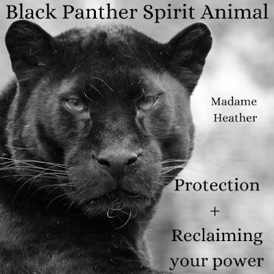 Black panther medicine