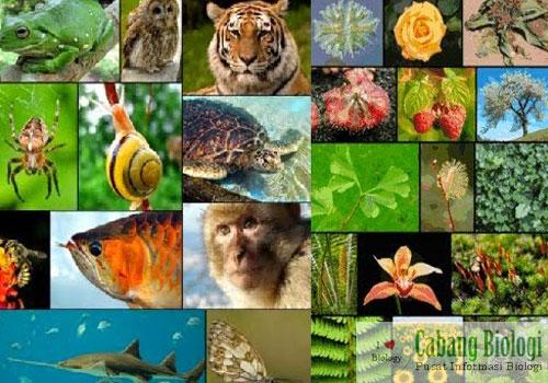 5 Macam Sistem Klasifikasi dalam Ilmu Biologi