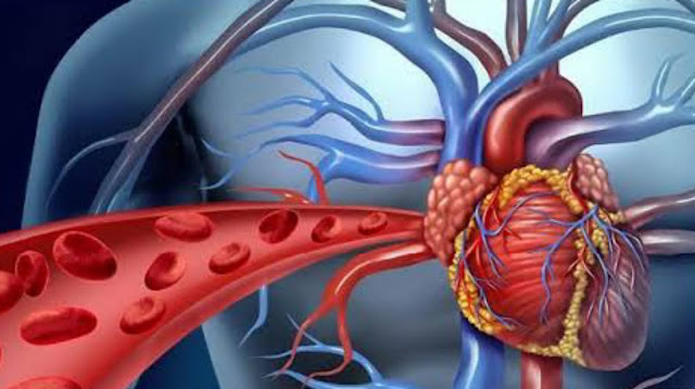Mengenali Anatomi Jantung dan Fungsinya