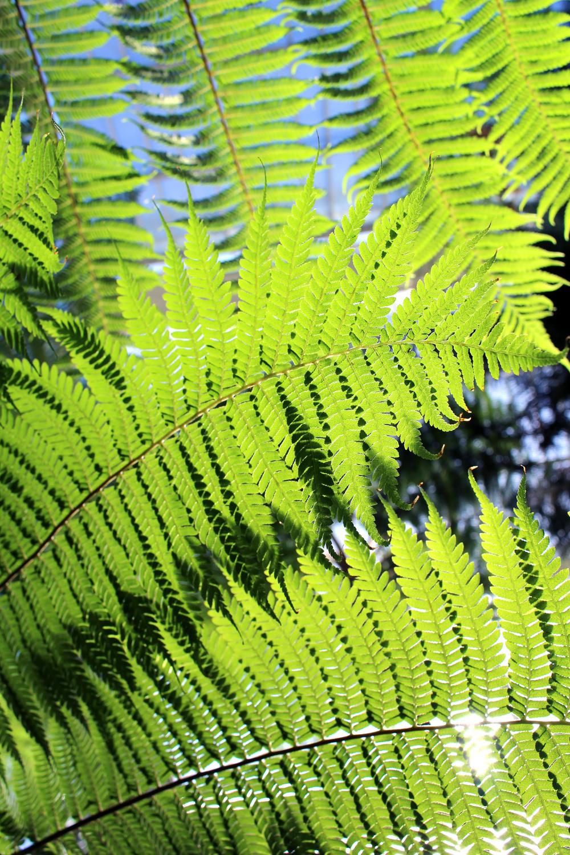 Ferns at Berlin Botanical Garden - travel & lifestyle blog