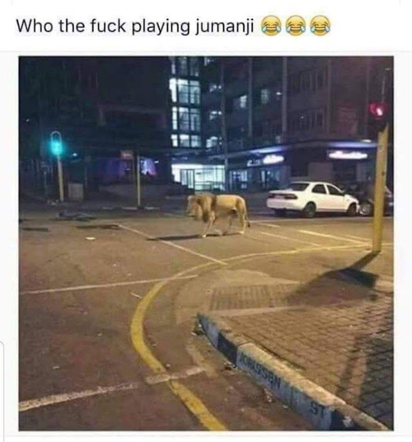 I bet they thought that dude was lion